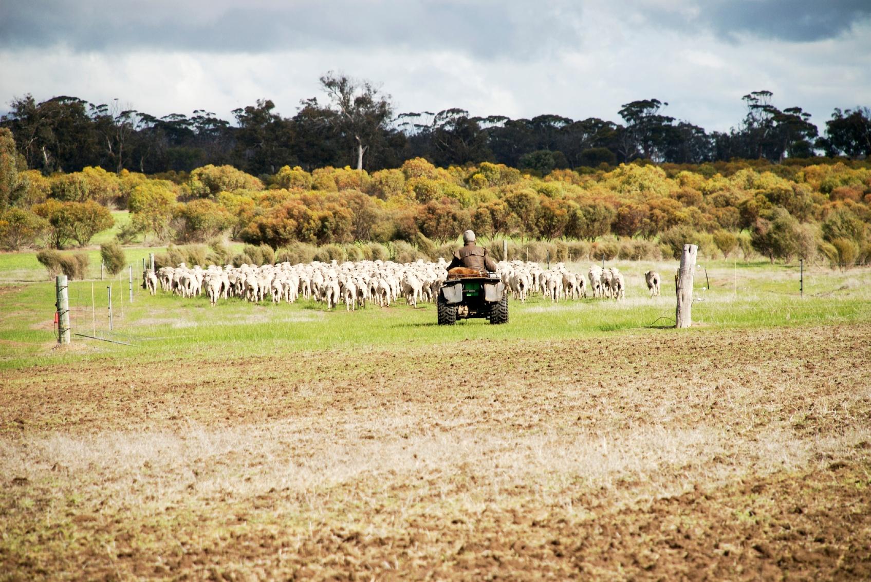 sheep farmer